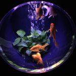 日本橋アートアクアリウムの金魚